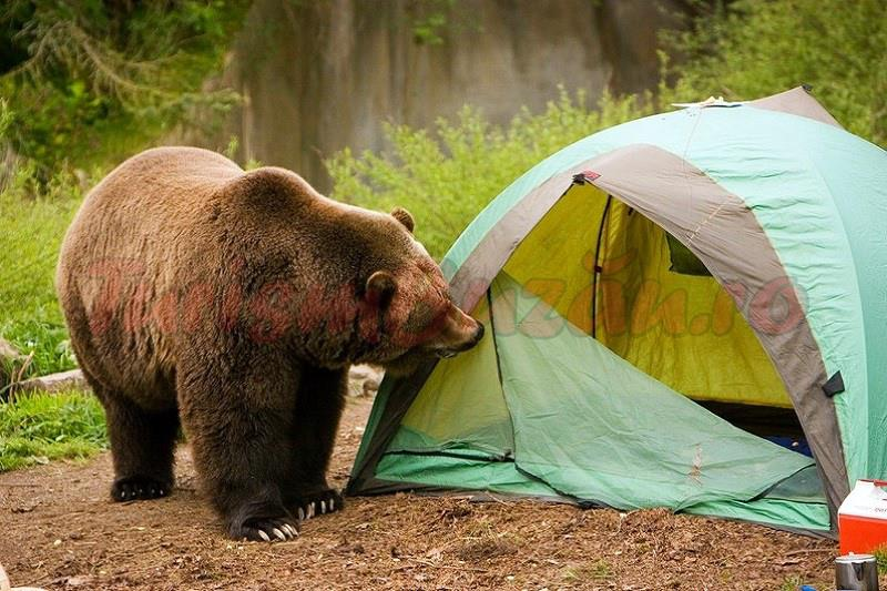 camping buzau